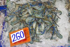 Many live freshwater prawns In the ice Price tag Royalty Free Stock Photos
