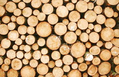 Many logs. Close up of a pile of cut logs, showing the age rings Stock Images