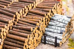 Many logs of spruce and birch trees in the warehouse of timber industry timber extraction. Royalty Free Stock Photo