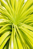 Many long green leaves Stock Images