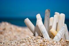 Many long seashells white gray on a blue sea beach sand beach summer sunny day Stock Photography