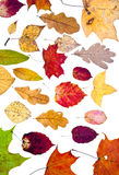 Many loose autumn leaves Stock Photo