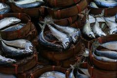 Mackerel fishes line up. Many mackerel fishes line up group background Royalty Free Stock Photos