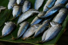 Mackerel fishes line up. Many mackerel fishes line up group background Royalty Free Stock Photography