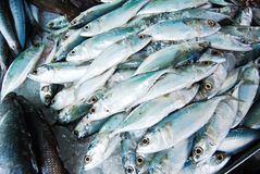 Many mackerel in fresh market Royalty Free Stock Photos