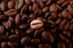 Many macro coffe beans closeup on coffee background. Royalty Free Stock Photo