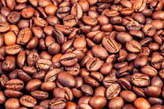 Many macro coffe beans closeup on coffee background. Stock Images