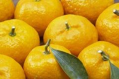 Many mandarin Stock Photography