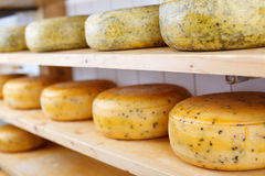 Many matured cheeses on shelves Stock Images