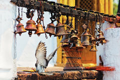Many metal sacrificial bells and landing dove Royalty Free Stock Images