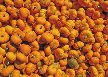 Many miniature pumpkins background Stock Image