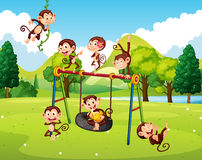 Many monkeys in the park Stock Images