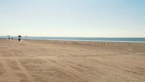 Many motorcyclists riding along the sandy beach from far away. Bikers column. stock video footage