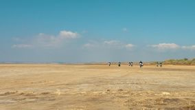 Many motorcyclists riding along the sandy beach from far away desert. stock video