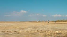 Many motorcyclists riding along the sandy beach from far away desert. Many motorcyclists riding along the sandy beach from far away. Bikers drag race ride a stock video