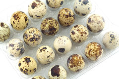 Many quail eggs in plastic package closeup. Many mottle quail eggs in plastic packaging cells  closeup diagonal view Royalty Free Stock Photography