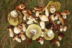 Many mushrooms Stock Photos