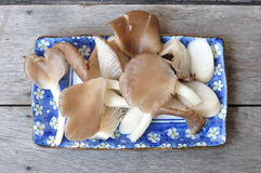 Many mushrooms in blue plate on wooden table Royalty Free Stock Photos