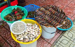 Many crabs stacked in rows Royalty Free Stock Images