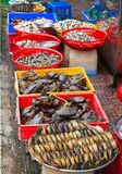 Many crabs stacked in rows Royalty Free Stock Photography