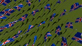 Many national flags of the Iceland waving on wind in green field. Royalty Free Stock Images