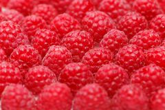 Many raspberry berries isolated on white. Many natural raspberry berries. copy space Stock Photography