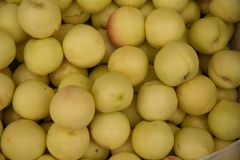 Nectarines yellow color stock photo