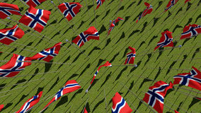 Many Norwegian flags blowing in the wind in green field. Stock Photos