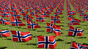 Many Norwegian flags in green field Stock Photography