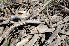 Many old waste wood Royalty Free Stock Photos