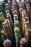 Many old wine bottles top view, vertical composition Stock Photo