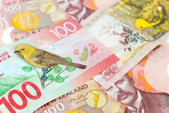 Many of one hundred New Zealand dallar banknotes as money backgr Royalty Free Stock Image