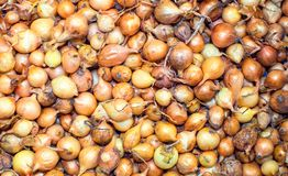 Many onions bulbs on a pile. Many onions bulbs on a pile in the box Royalty Free Stock Photos