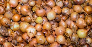Many onions bulbs on a pile. Many onions bulbs on a pile in the box Royalty Free Stock Photography