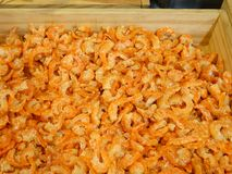 Many orange dried shrimp , dried salted prawn ready for cooking royalty free stock photos