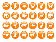 Many orange icons Stock Photography