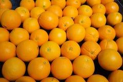 Many orange royalty free stock image