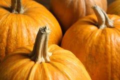 Many orange pumpkins as background, closeup. Autumn holidays royalty free stock photography