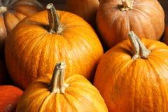 Many orange pumpkins as background, closeup. Autumn holidays stock photo