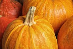 Many orange pumpkins as background, closeup. Autumn holidays stock image