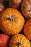 Many orange pumpkins as background, closeup. Autumn holidays royalty free stock image
