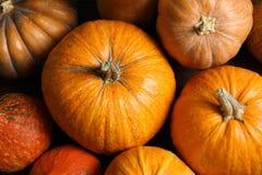 Many orange pumpkins as background, closeup. Autumn holidays stock images