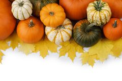 Many orange pumpkins. Many colorful pumpkins frame isolated on white background, autumn harvest, Halloween or Thanksgiving concept stock photo