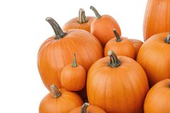 Many orange pumpkins. Isolated on white background, Halloween concept stock images