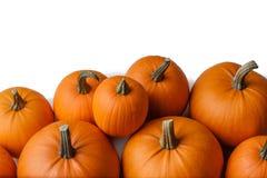 Many orange pumpkins. Isolated on white background, Halloween concept stock image
