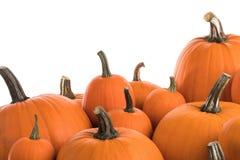 Many orange pumpkins. Isolated on white background, Halloween concept royalty free stock image