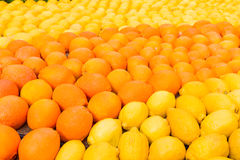 Many oranges and lemons during the festival of Menton, France Royalty Free Stock Image