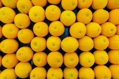 The many oranges stock photography