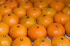 Many oranges in a row Royalty Free Stock Photos