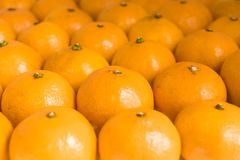 Many oranges in a row royalty free stock image